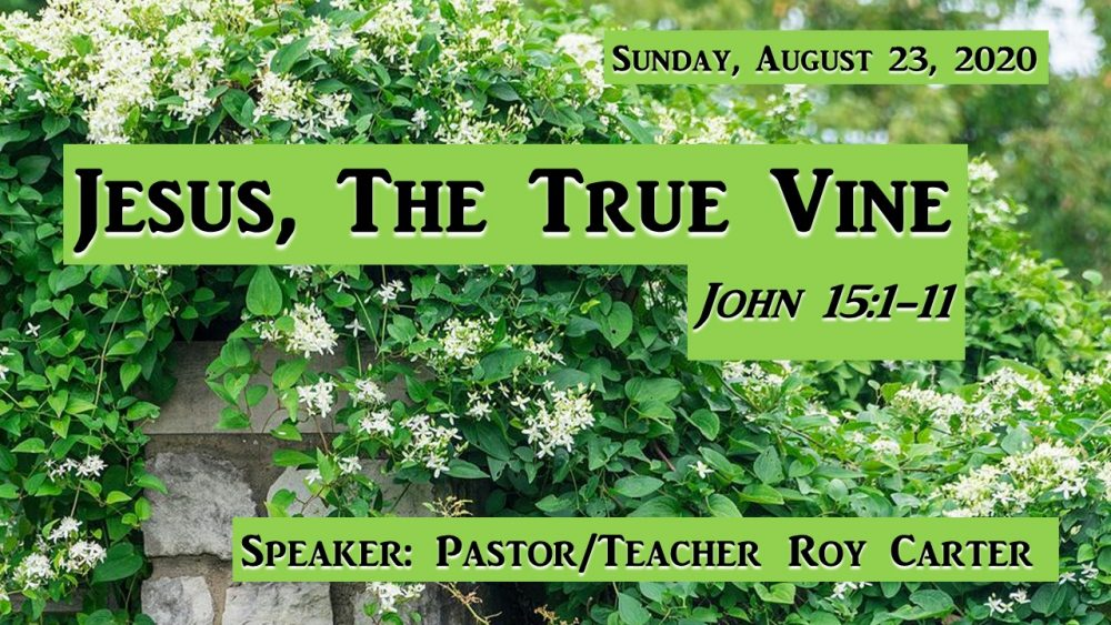 Jesus, The True Vine Image